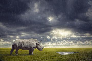 Poster Rhino Thirsty Rhino