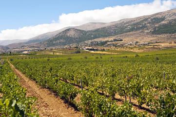 Poster de jardin Afrique du Sud Weinbau Libanon