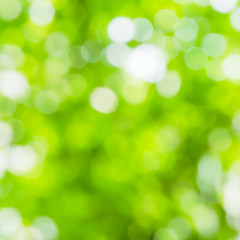 Green and white blur bokeh abstract light spring forest backgrou