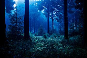 Fototapeten Wald night forest