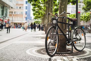 Fototapeta Bike standing near a platan tree in Frankfurt, Germany obraz