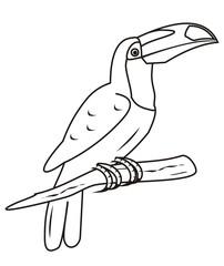 toucan-coloring book
