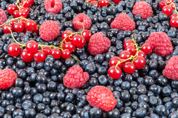 Blueberries raspberries red currant background