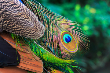 close up shot on colorful peacock feather.