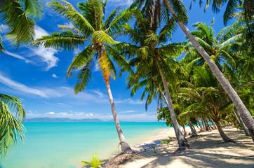 Sonne, Palmen, Meer und Sand: Karibischer Traumstrand :)