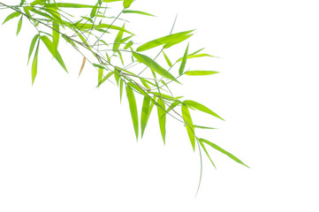 Wall Mural - Green bamboo leaves on a white background