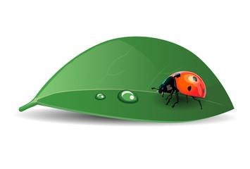 A ladybug on a leaf