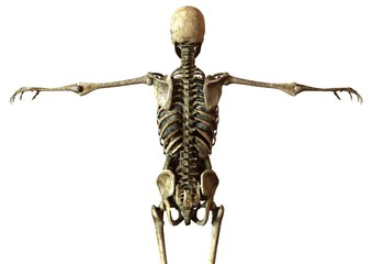 human skeleton with detailed anatomy organs