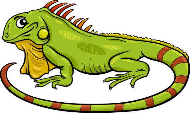 iguana animal cartoon illustration