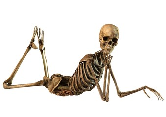 female skeleton with detailed anatomy organs