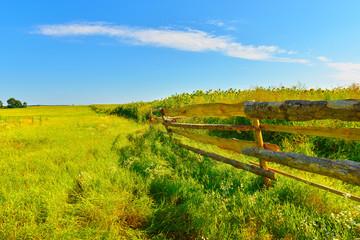 Papiers peints Vignoble Summer country