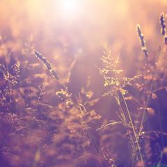 Blurry vintage meadow