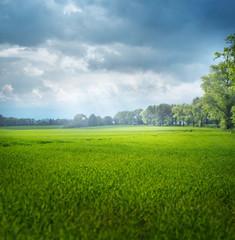 Foto op Plexiglas Pistache Beautiful summer landscape of the rular area