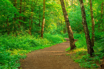 path in an empty summer forest in the early morning