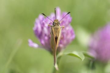 Beautiful butterfly on a purple flower