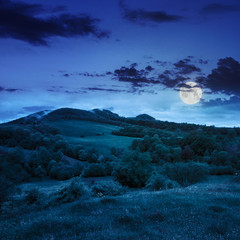 forest near meadow in mountains at night