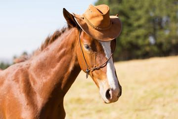 horse wearing a cowboy hat