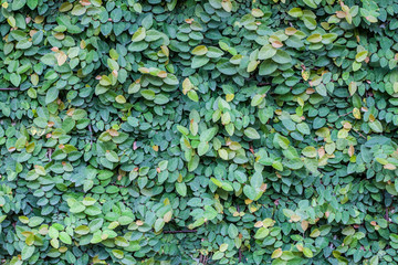 Wall Mural - Green leaves texture