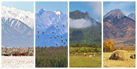 Collage. Mountain scenery of four seasons