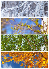 Collage. Birch tree. Four seasons. Сalendar