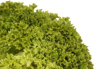 Hydroponic Bibb Lettuce