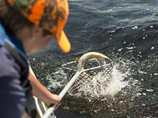 Fisherman Netting a fish