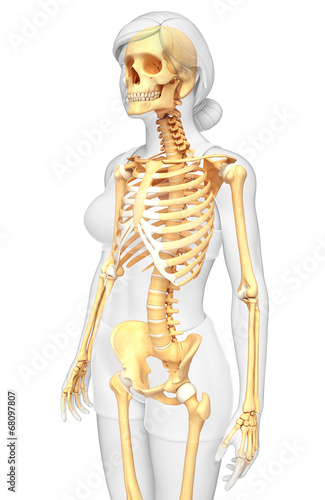 Female Skeleton Side View Stock Photo And Royalty Free Images On