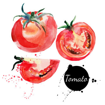 Tomato set. Hand drawn watercolor painting on white background.