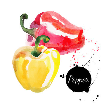 Red and yellow peppers. Hand drawn watercolor painting