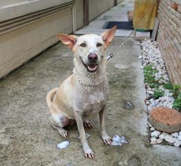 Bath time for happy Dog