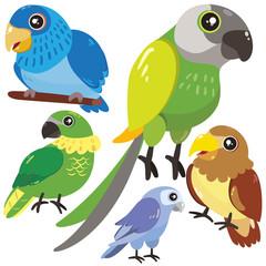 five birds on white background