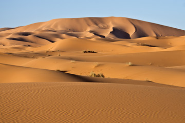 Dune del deserto