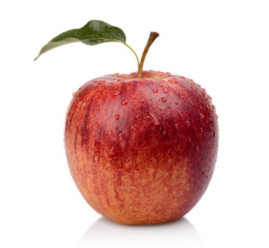 Studio shot of whole wet red apple isolated