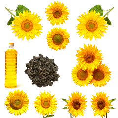 Collection sunflower, sunflower seeds and a bottle