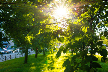Sunbeam through the trees