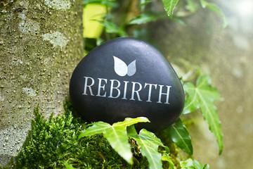 Rebirth Fototapete