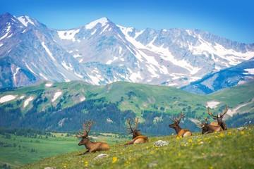 Wall Mural - North American Elks