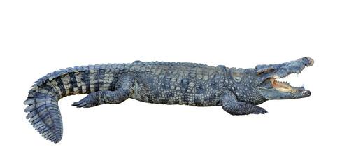 Autocollant pour porte Crocodile crocodile