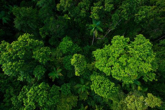 Rain forest from air near Kuranda, Queensland, Australia
