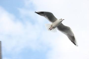 Bulutlar ile Beraber Uçmak
