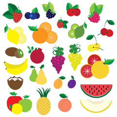 Colorful fruits and berries vector