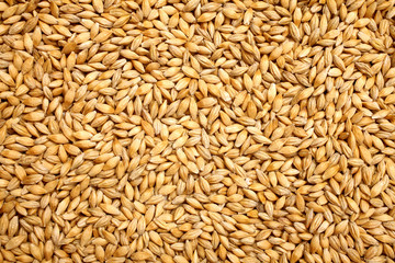 Obraz Wheat background view from the top close up - fototapety do salonu