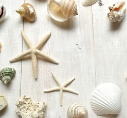 Shells with starfishs