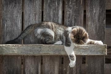 Kitten playing outdoors