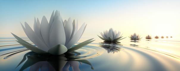 Lotus im See Fototapete