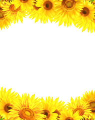 Fototapete - Border with sunflowers