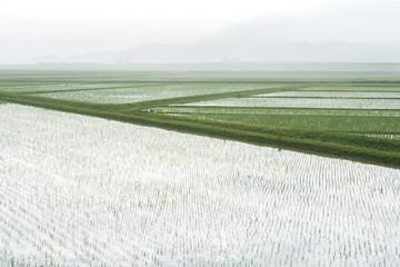 霧の田園地帯