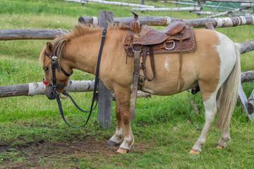 Horse with beautiful saddle