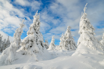 Fototapete - Winter forest under snow