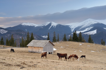 Pasture in the mountain village